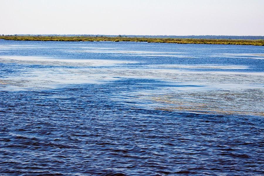 aquatic grass in redfish pond