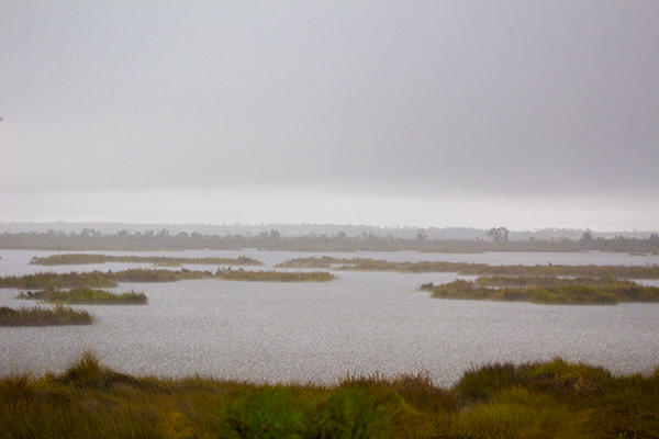 Raining in the Marsh