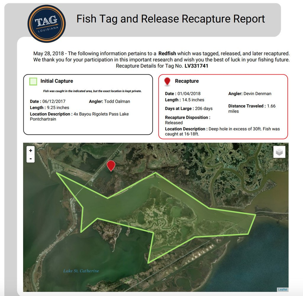 Redfish Geoghagen Slidell Louisiana Recapture Report
