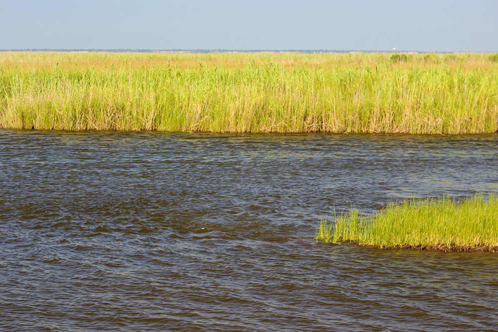 marsh brackish moving water